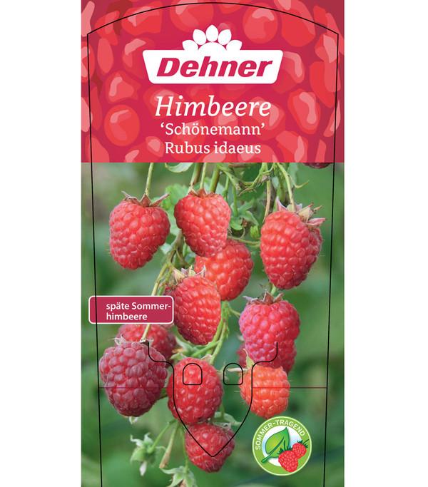 Himbeere 'Schönemann'
