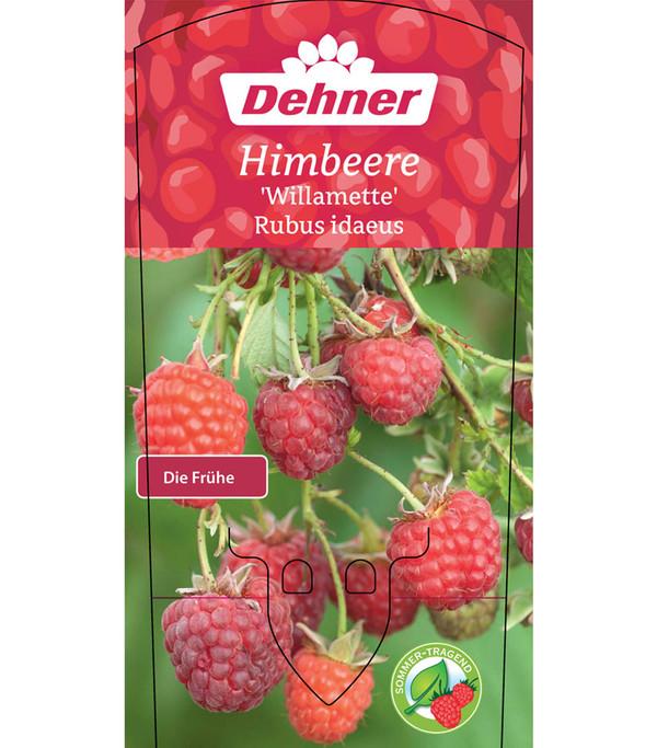 Himbeere 'Willamette'