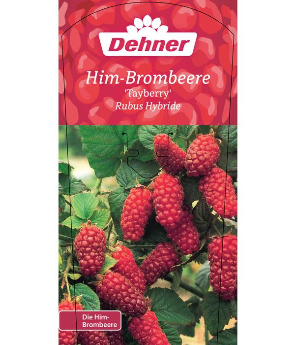 Berühmt Him-Brombeere 'Tayberry' | Dehner @QV_86