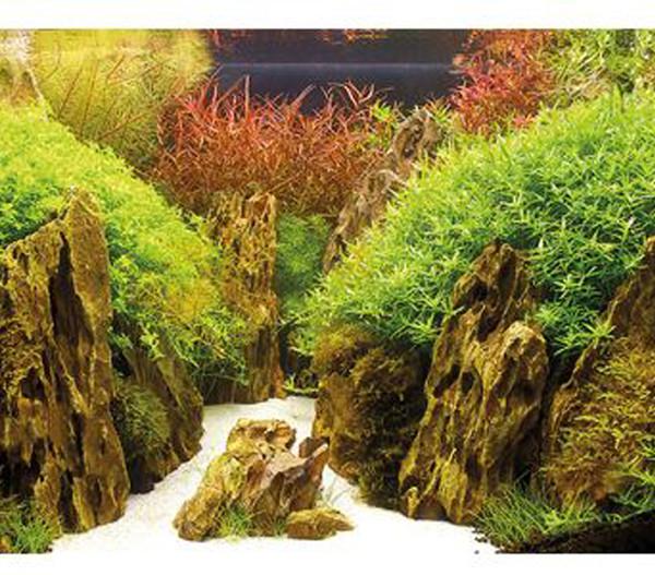 Hobby Aquarium Rückwand Canyon/Woodland