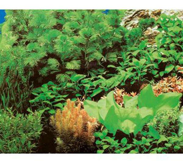 Hobby Aquarium Rückwand Pflanzen 8/Marine Blue