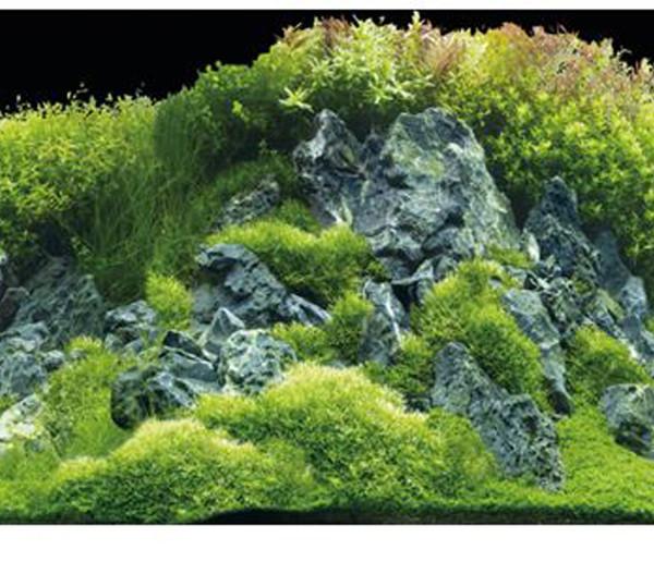 Hobby® Aquarium Rückwand Planted River/Green Rocks