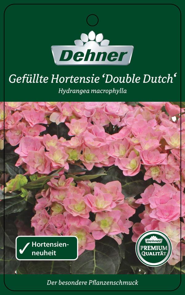 Hortensie 'Double Dutch'