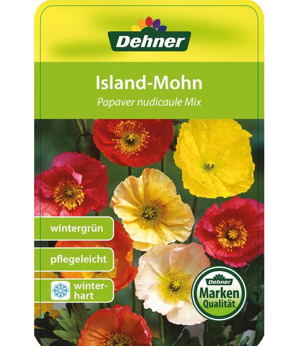 Island-Mohn
