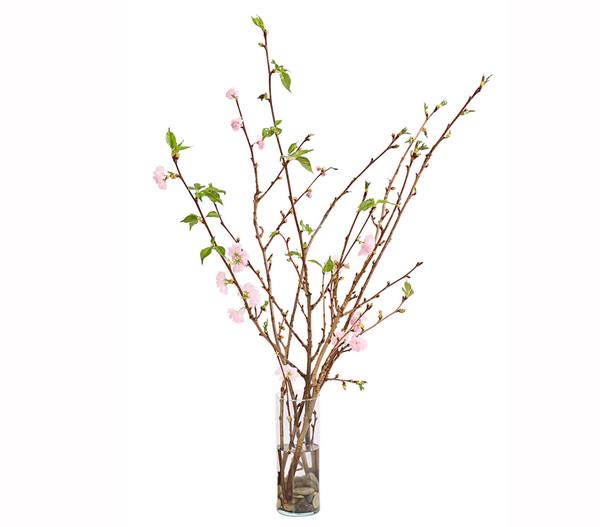 Japanische Kirschen-Bund, natur, 80 - 100 cm