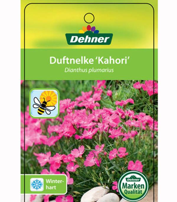 Kahori nelke pink feder nelke dehner - Duftende gartenpflanze ...