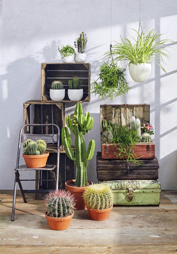 Kaktus, verschiedene Sorten