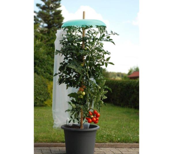 KHW Tomatenhut Starter-Set