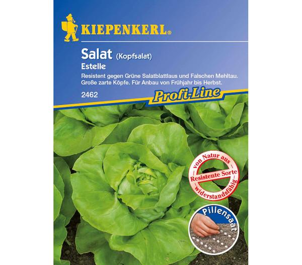Kiepenkerl Saatgut Kopfsalat 'Estelle'