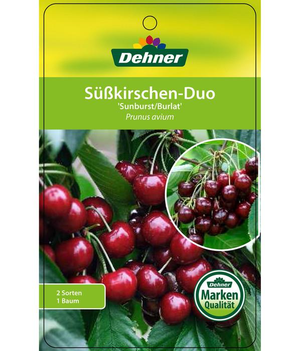 Kirschen-Duo 'Sunburst/Burlat'