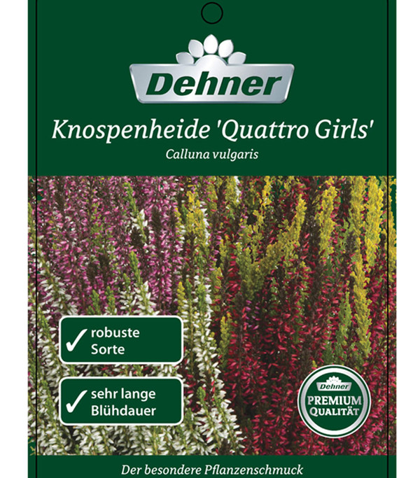 Knospenheide 'Quattro-Girls®'