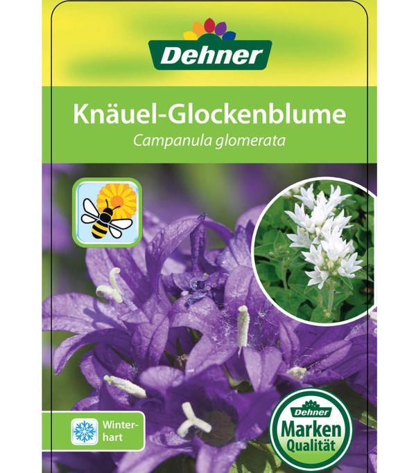 Knäuel-Glockenblume