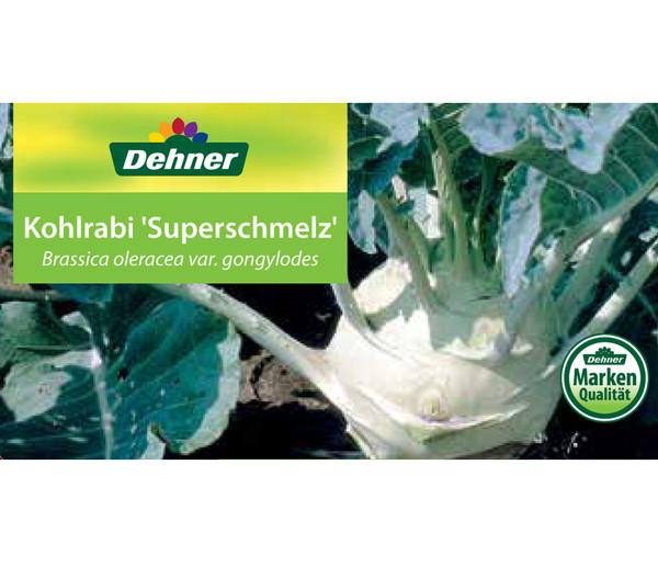 Kohlrabi Superschmelz, 12er Schale