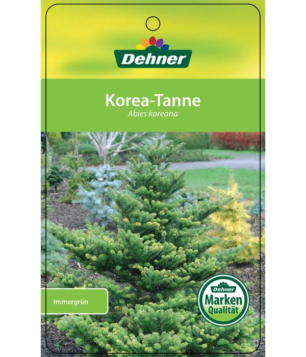 Korea-Tanne, 120 - 150 cm, getopft