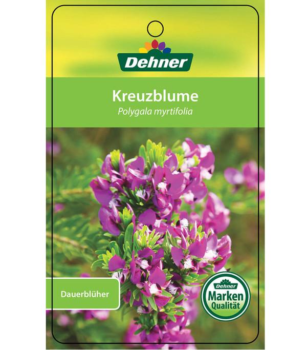 Kreuzblume, Busch