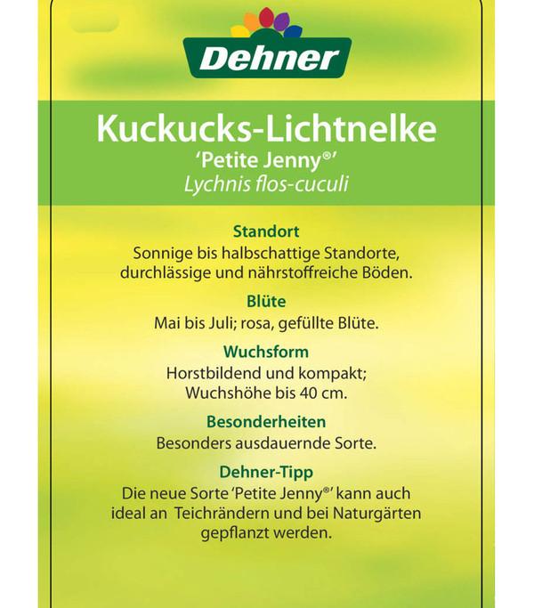 Kuckucks-Lichtnelke 'Petite Jenny®'