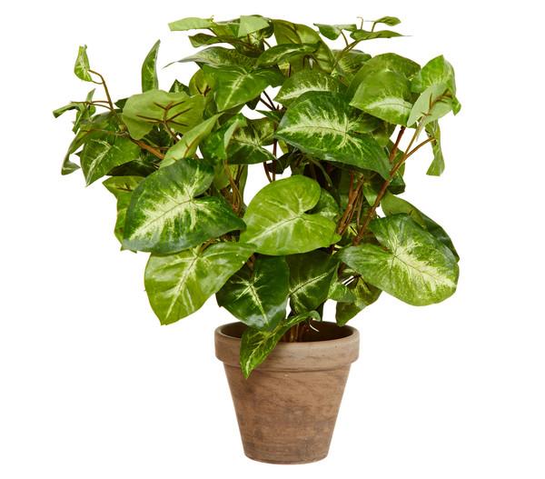 Kunstpflanze Fittonia, 35 cm