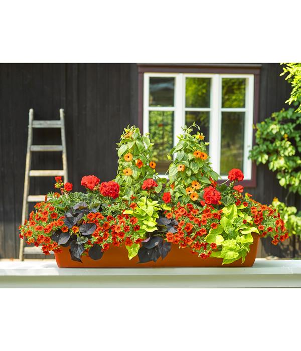 Kunststoff-Blumenkasten Iris, terrakotta
