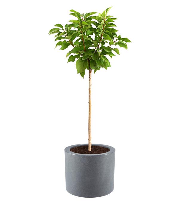 Kunststoff-Blumenkübel Kubus, rund, anthrazit, Ø 40 cm