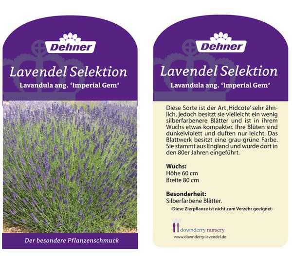 Lavendel 'Imperial Gem'