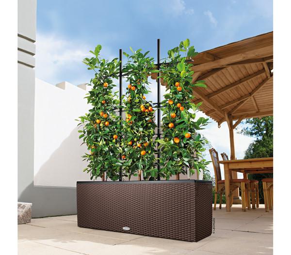 LECHUZA® Blumenkasten Trio Cottage, rechteckig, 100 x 32 x 34 cm