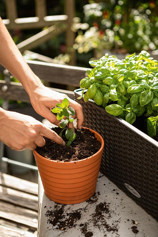 LECHUZA® VEGGIEPON Gemüsepflanzsubstrat
