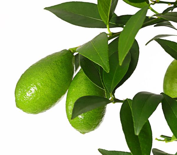 Limette 'Limequat'