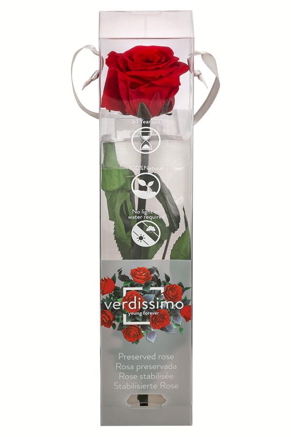 Long-Life-Rose mit Stiel, rot