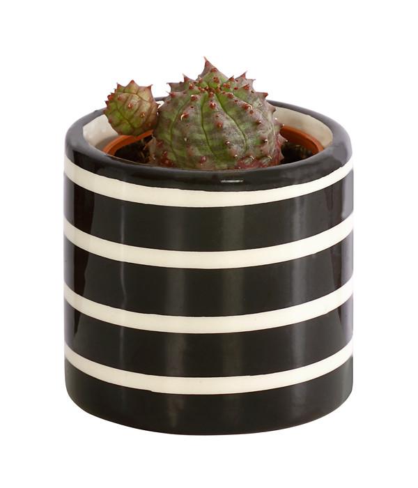 Micro Kakteen und Sukkulenten Mix, in Keramik