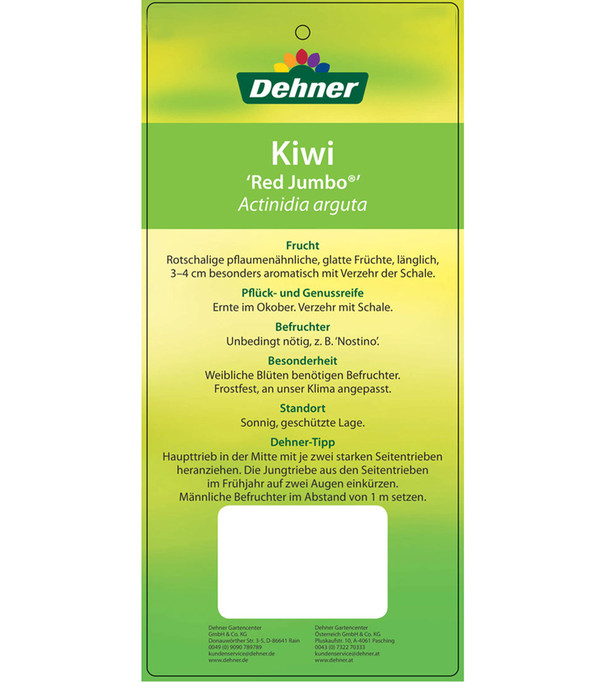 Mini-Kiwi 'Red Jumbo'