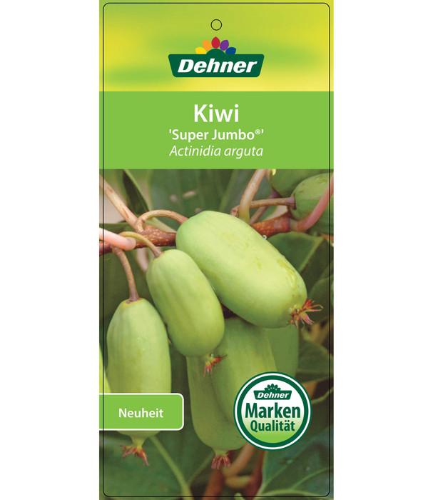 Mini-Kiwi 'Super Jumbo'