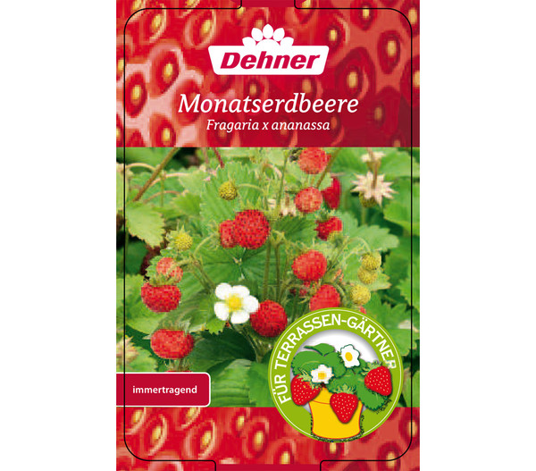 Monatserdbeere, 4er-Pack