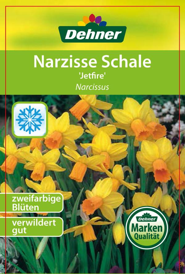 Narzissen 'Jetfire', Schale