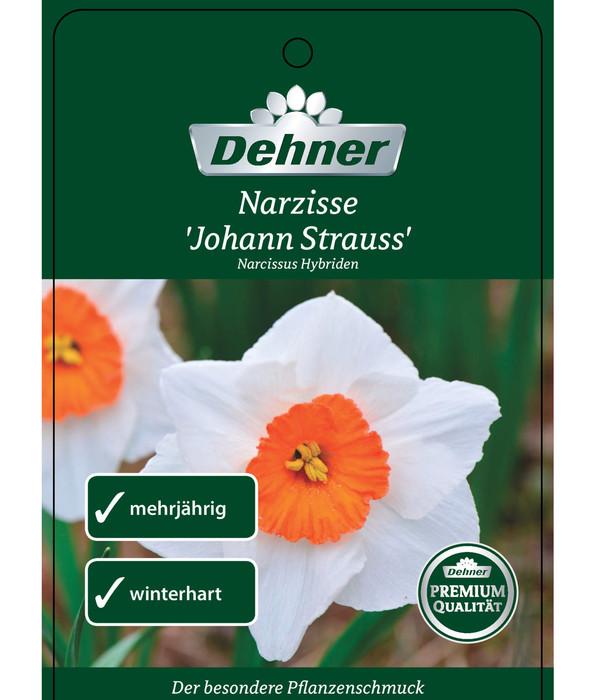 Narzissen 'Johann Strauß'