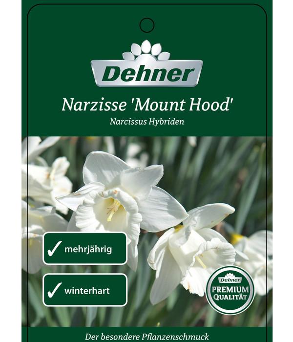 Narzissen 'Mount Hood'