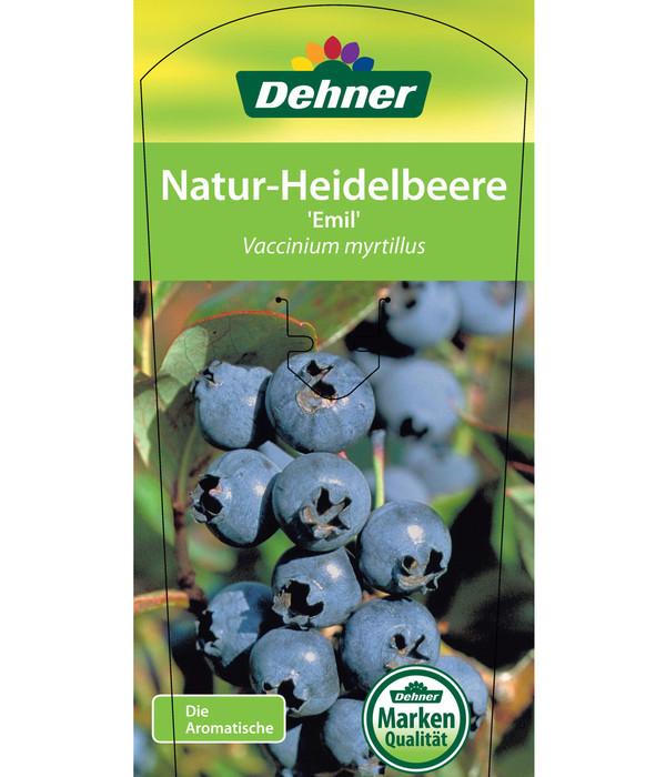 Natur-Heidelbeere 'Emil'