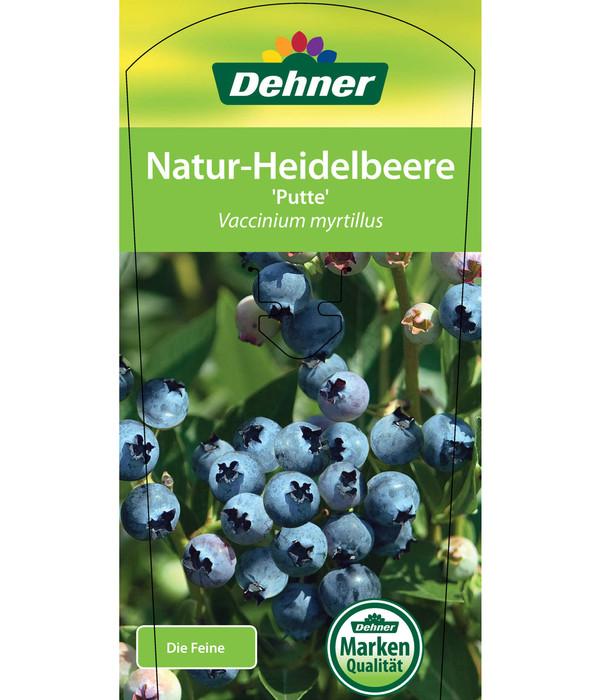 Natur-Heidelbeere 'Putte'