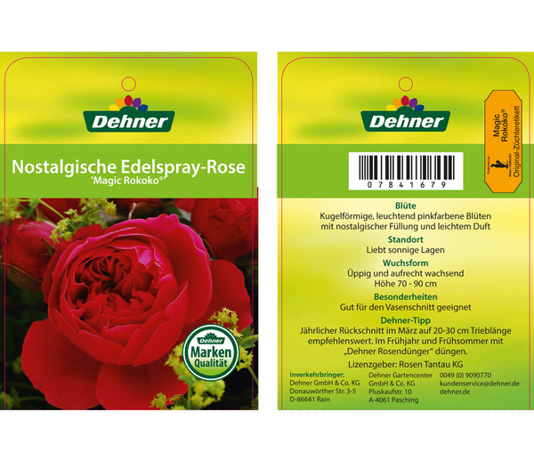 Nostalgische Edelspray-Rose 'Magic Rokoko'®