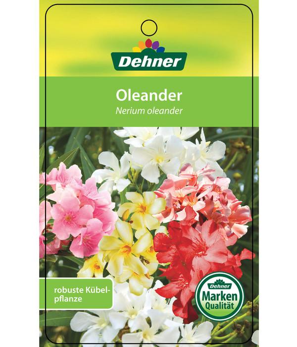oleander solit rbusch dehner. Black Bedroom Furniture Sets. Home Design Ideas