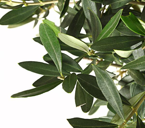 Olive-Ministamm