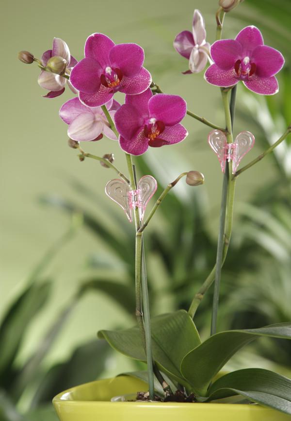 Orchideen-Clip, 2 Stk.
