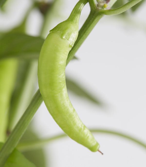 Peperoni 'Hot Fajita'