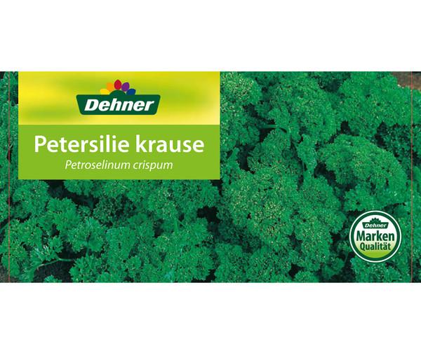 Petersilie 'Mooskrause', 12er Schale