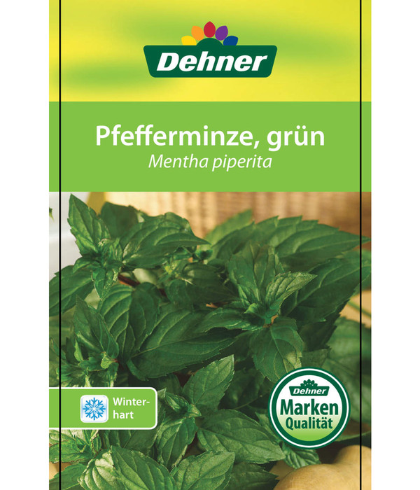 Pfefferminze