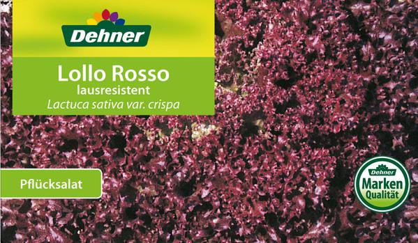 Pflücksalat Lollo Rosso, lausresistent, 12er Schale