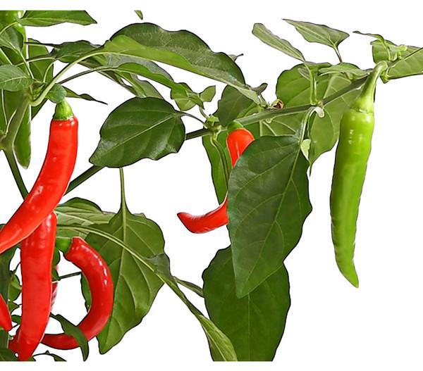 Pick-a-Hot Pep® Peperoni, mit Frucht