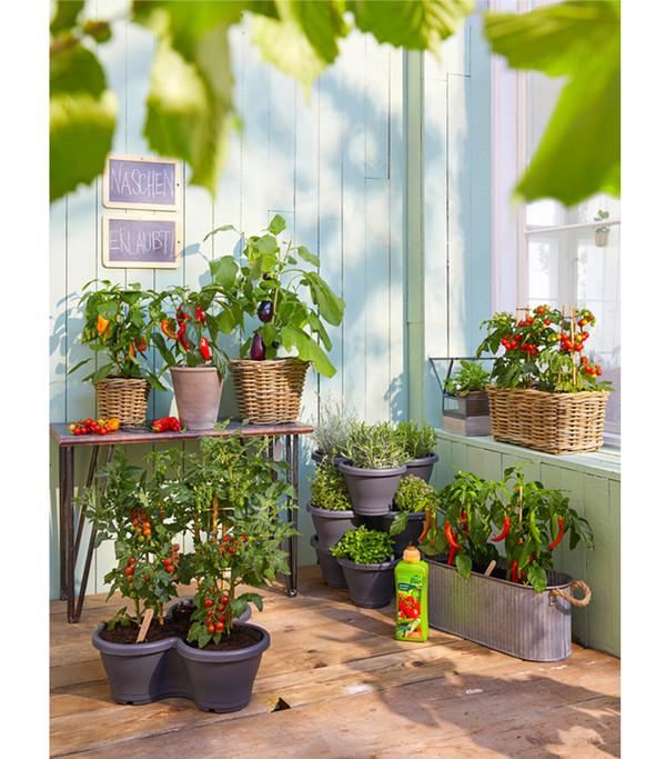 Pick-&-Joy® Aubergine, mit Frucht