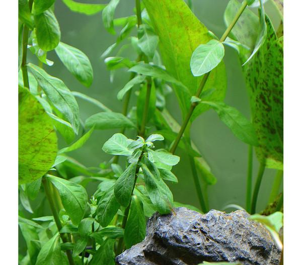 Planet plants 120er set topf bund aquarium pflanzen for Aquarium pflanzen