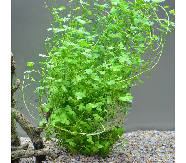 Planet Plants 20er Set Netz & Topf, Aquarium Pflanzen