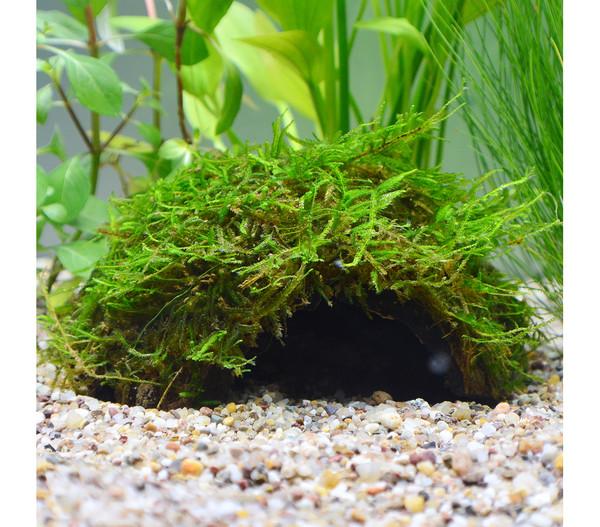 Planet Plants Aquarium-Pflanzen 30er Set Deko & Töpfe